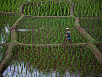 Rabi planting is expected to continue till the month's end. The government has set a rabi-season crop planting target of 638.37 lakh hectares.