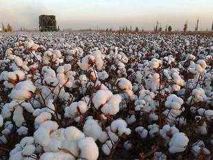 The cotton yarn export quantity was 23% lower YoY during 7M FY2017.