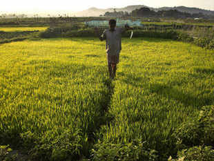 The insurance is being offered by National Insurance Company and their officials will be facilitating enrollment of farmers in the scheme, the minister said.