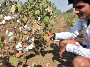 Production of cotton continues to remain well below the world average productivity mark.
