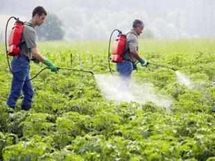 Pesticides exposure may damage sperm in teenagers