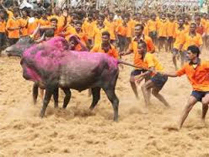 Supreme Court rejects plea for judgement on Jallikattu