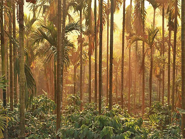 Coffee Break: Get closer to caffeine in a remote plantation in Sakleshpur
