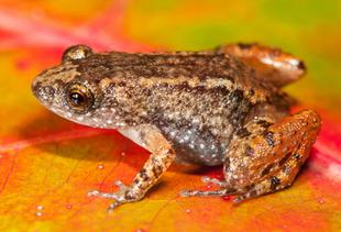 frog-ed