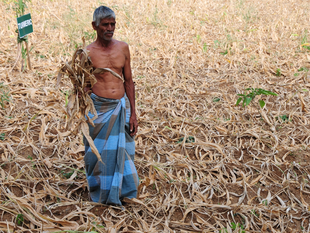 The early signs of an El Nino come at a time when Indian agriculture appeared to have shaken off the setbacks from two consecutive droughts in 2014 and 2015.