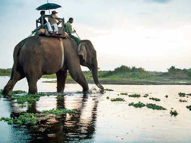 Is the wildlife calling you? Here's why Nepal is the best holiday option for you and your family