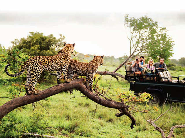 Embark on an inspiring trip to the wild this summer with your family