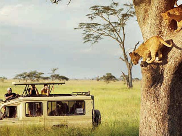 Explore wildlife on wheels in East Africa