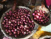 Retail prices of onion ruled in the range of Rs 32-40/kg in metros today, as per official data.