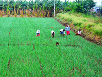 The survey noted that at times farmers were not gaining from minimum support price (MSP) mechanism in which state agencies purchase output at a remunerative price.