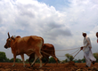 Great farmer bailout imperils India sovereign-rating upgrade