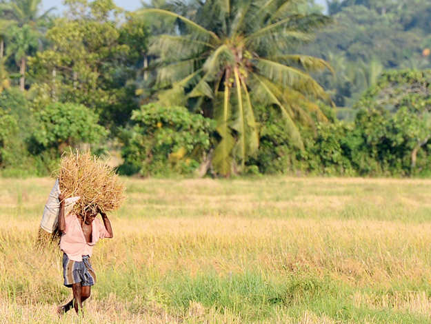 NDA MPs hope budget will empower villages, farmers