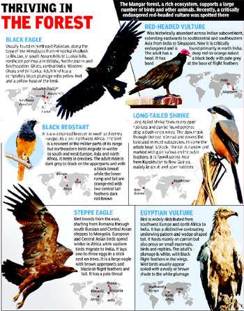 'Fragile' Mangar hosts rich bird life