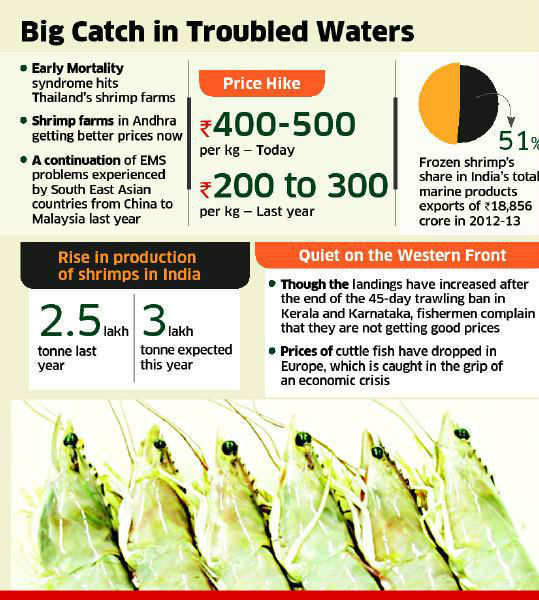 Thailand's killer disease puts Indian shrimp on high table
