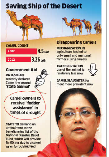 Mission Camel: Vasundhara Raje for saving the 'ship of the desert', bans slaughter