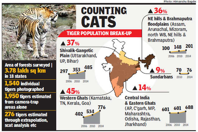 Tiger numbers grow by 30% in 4 years: Can forests sustain India's Big Cat boom?