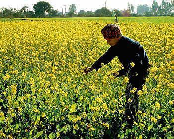 Camp near Mumbai's Shirota Lake or re-create your 'DDLJ' moment in the mustard farms of Punjab's Kila Raipur