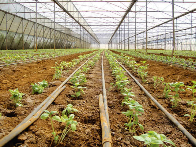 Is organic food that you eat free of synthetic pesticides & chemical fertilisers?