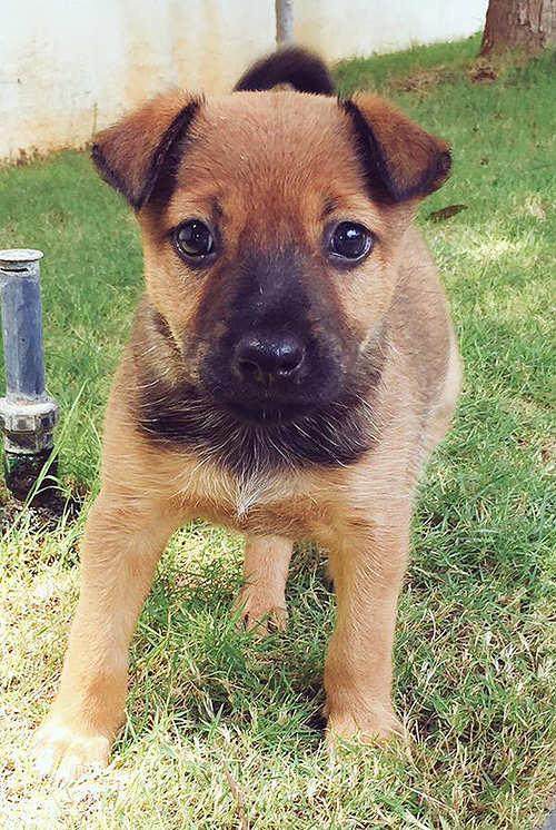 Puppy power: AirAsia India CEO Mittu Chandilya rescues dog