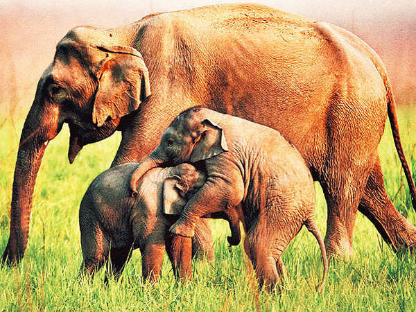 Discover nature with your loved ones at Jim Corbett National Park, Uttarakhand