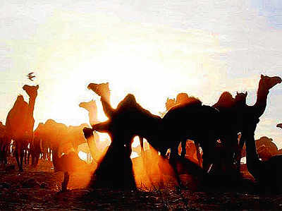 Attend the Bikaner camel festival in Rajasthan or the Wine and Music Festival in Nashik to kick-start the New Year
