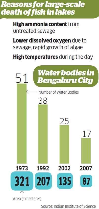 Bengaluru's Ulsoor Lake turns into fish graveyard: Is pollution plaguing water bodies?