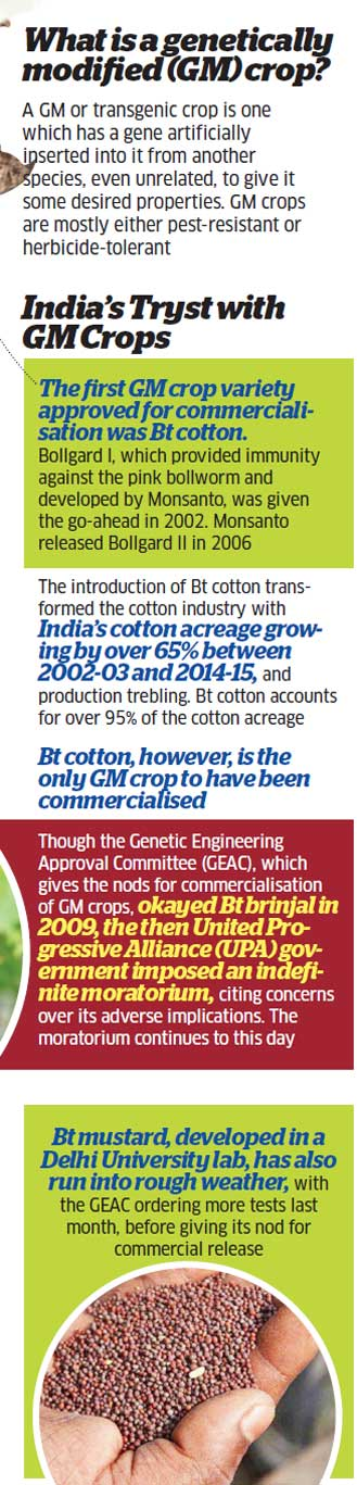 GM crops: Government should set up an independent regulator at the earliest