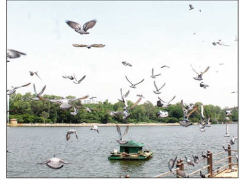 40 bird species return to lakes in Bengaluru after Rajesh Rao's revival efforts