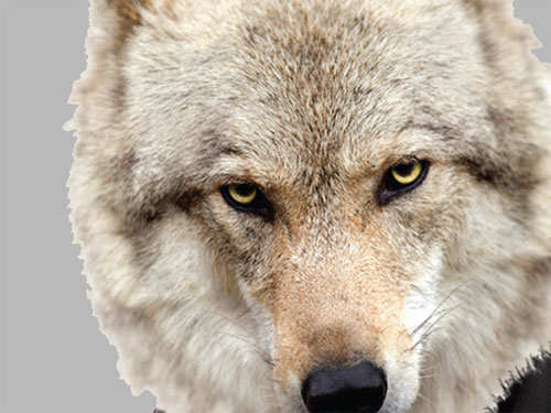Move over, the Wolves of Wall Street! High-profile & wealthy startuppers are the new bad guys of corporate world