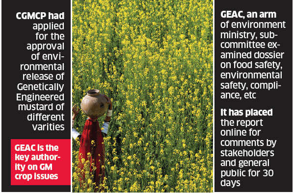 Genetically Modified mustard gets scientific nod, safe tag from green ministry