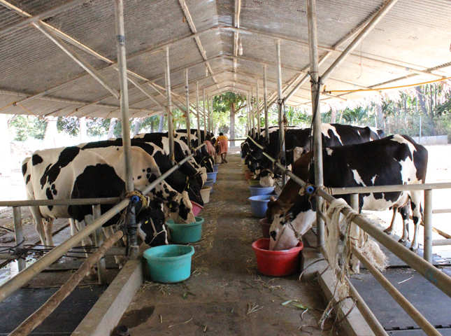 Wearables for cows: How Stellapps Technologies is 'Milking' its way to success