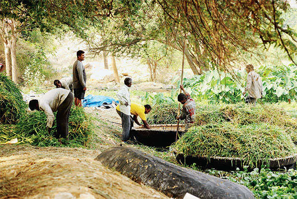 Why Bellandur lake clean-up exercise could snap many human linkages