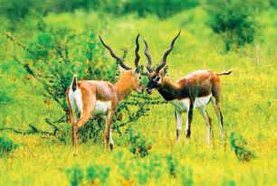 Quick Getaway: Plan a trip to Velavadar near Gujarat or Sri Hemkunt Sahib near Delhi this summer