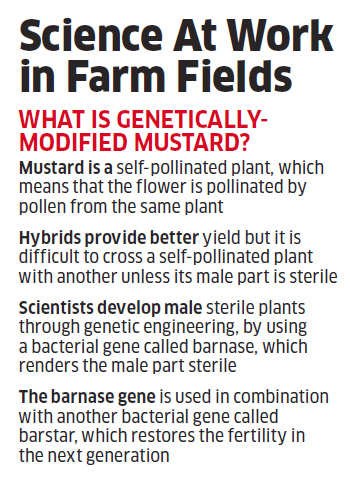 Will GM mustard be able to survive the challenges ahead after approval?