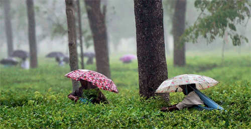 Planning a vacation? Here are the 7 best destinations in India to travel to this monsoon