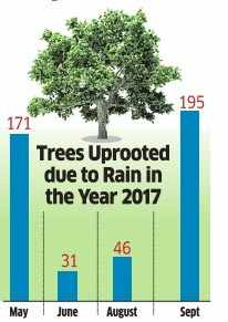 Uprooted trees point to the lack of focus on urban tree management