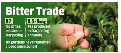 Continued deadlock may pare even next year's darjeeling tea output by 30%