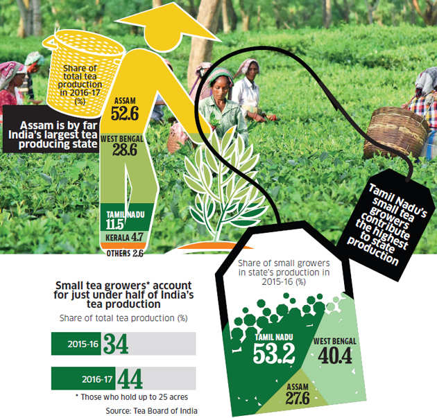 Assam government's move to regularise landholdings can improve the fortunes of small tea growers