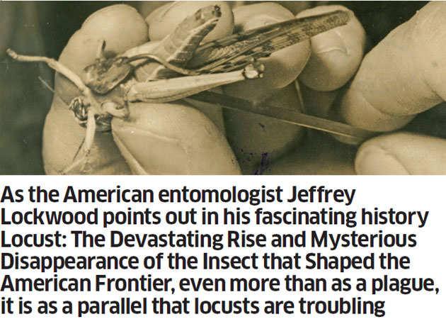 The missing phenomenon of locust attacks