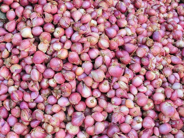 This type of onion can help fight drug-resistant tuberculosis