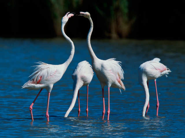 Do you want to become the CFO aka Chief Flamingo Officer at a 1,000-acre resort in Bahamas?