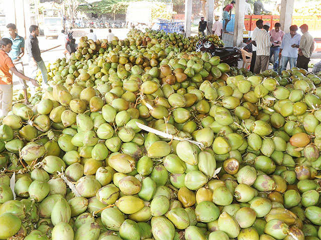 Packaged tender coconut water set to turn dearer thumbnail