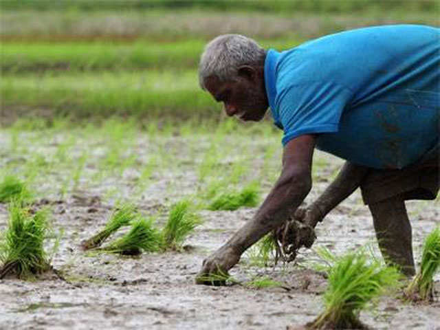 Maharashtra farmers say they'll use GM seeds