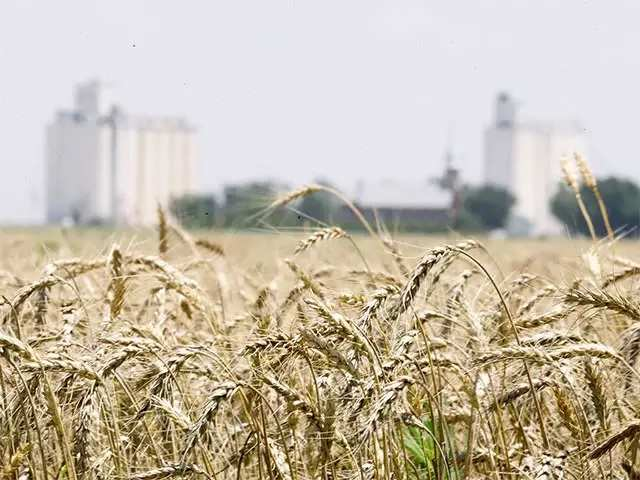 Govt hikes import duty on wheat, almond, 3 more items