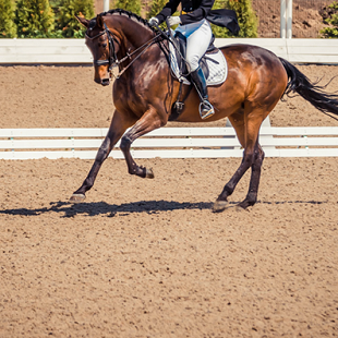 Winner's Circle: 6 Prestige Properties Near Top Equestrian Events