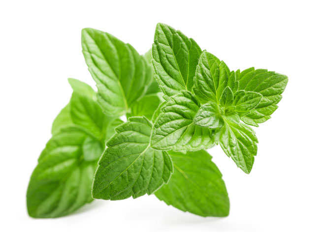 Mentha oil firms up over 1% on demand uptick thumbnail