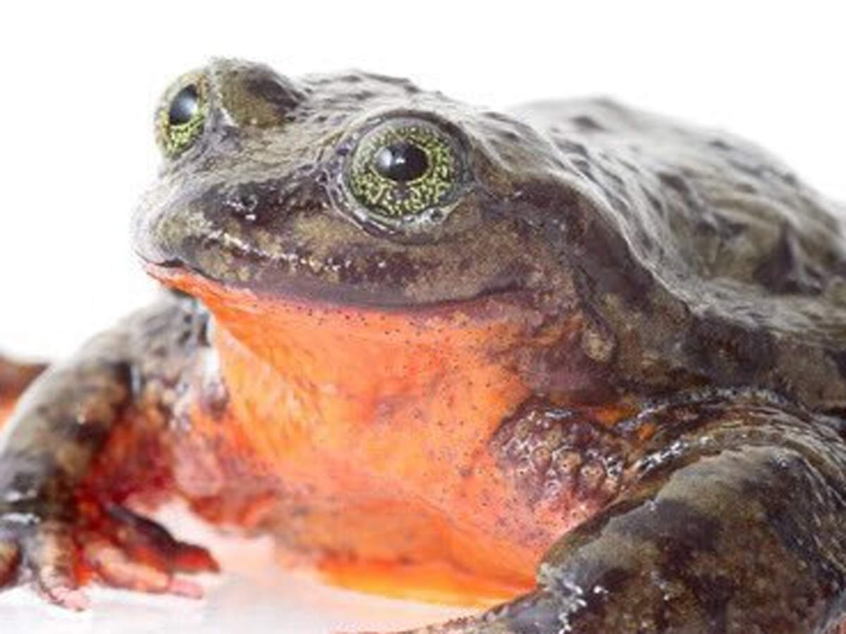 Heard of Romeo, the frog? Turns out, he isn't lonely any longer