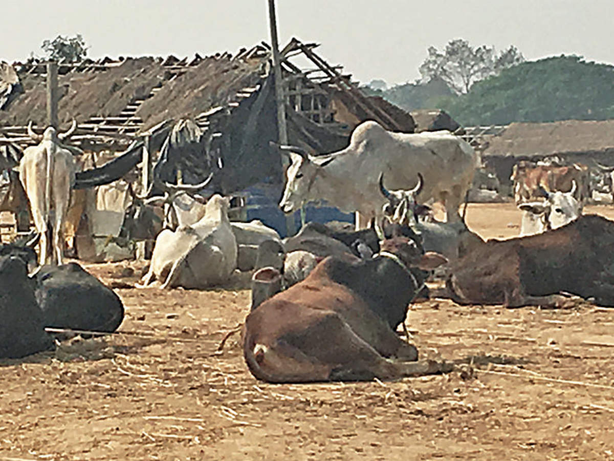 Vigilante violence in north India is choking cattle trade in West Bengal's weekly markets