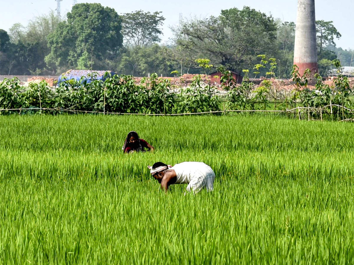 UK, India experts explore smart tech solution for Indian farmers