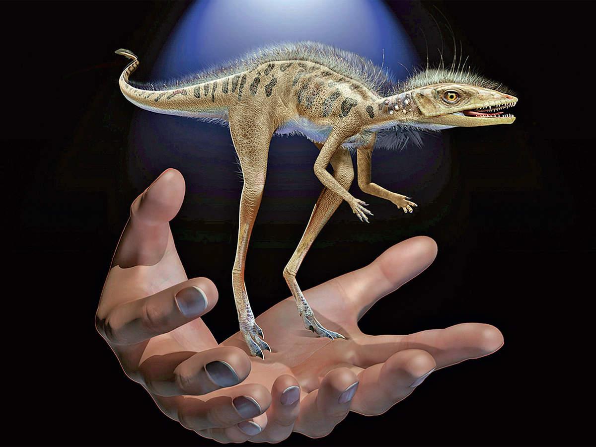 Kongonaphon, ancestors of dinosaurs, lived 237 million years ago